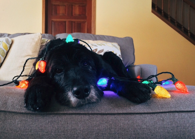 Here's What to get the Dog Owner on Your Holiday List